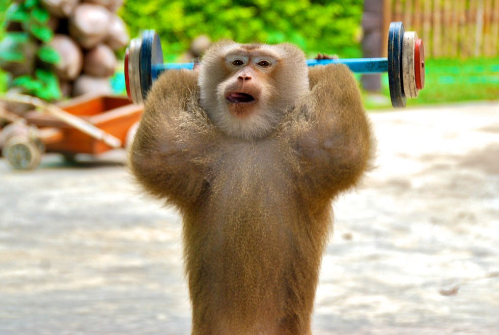 Monkey Exercising